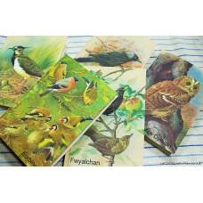 Bird notebooks.
