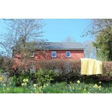 Daffodil Yellow & Lilac Welsh Quilt QZ16